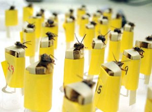 bomb-sniffing-bees-1